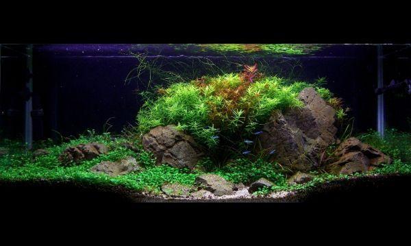 bể thủy sinh nico (uttoshii)