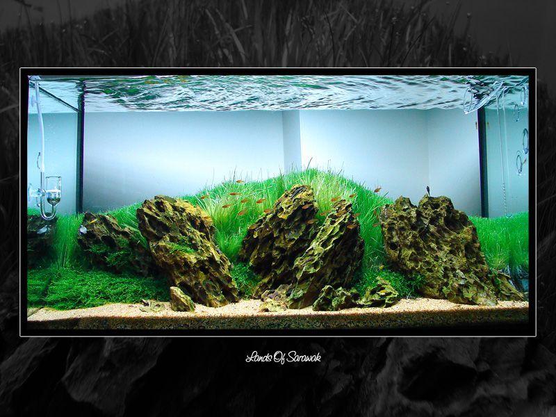 bể thủy sinh của ruben car