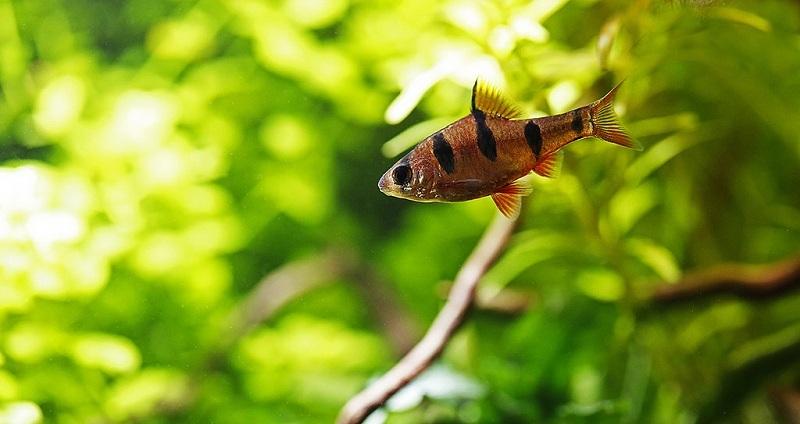 cá bơi trong bể thủy sinh