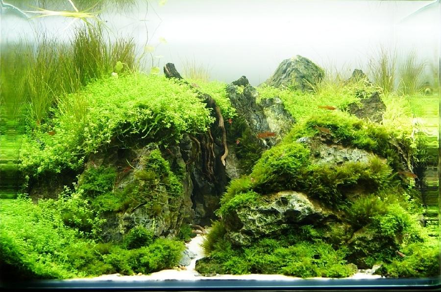 bể thủy sinh bố cục núi rêu