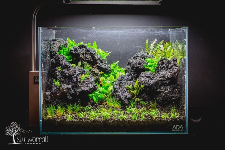 trồng cây vào bể thủy sinh