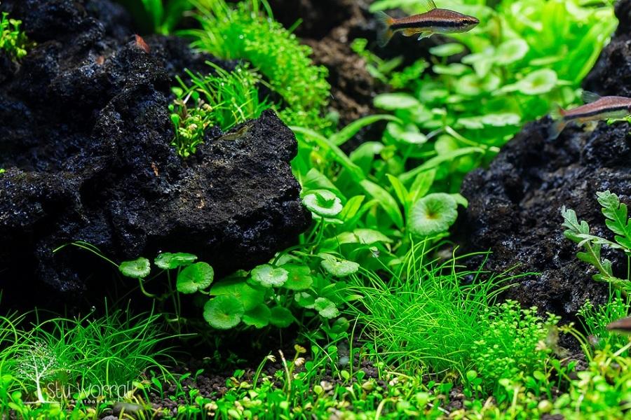 cây thủy sinh phát triển tốt, nước trong
