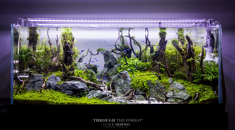 bể thủy sinh rừng 109 ngày tuổi