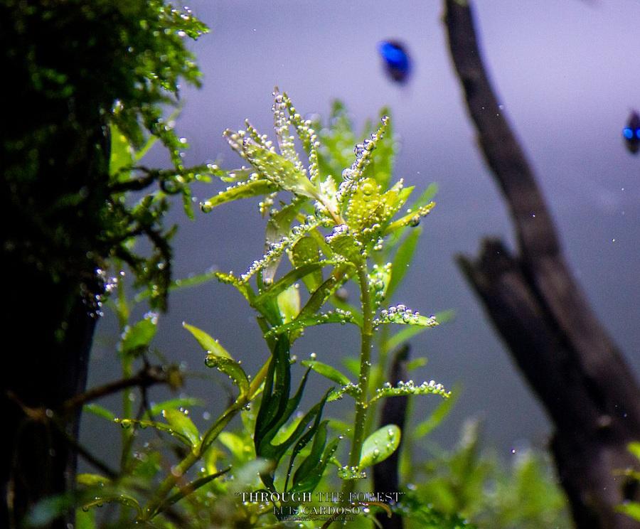 cây thủy sinh thở