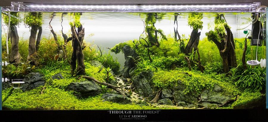 cắt tỉa bể thủy sinh bố cục rừng