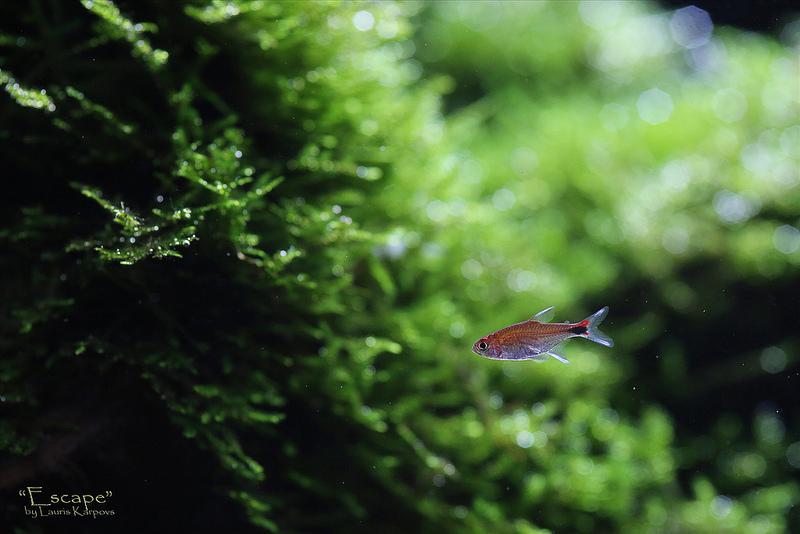 rêu quang hợp nhả oxi