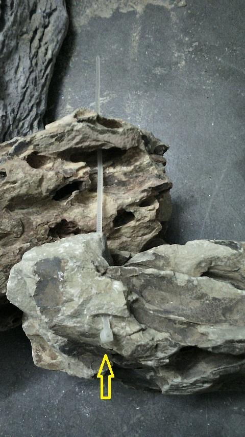 xỏ dây rút vào đá tiger