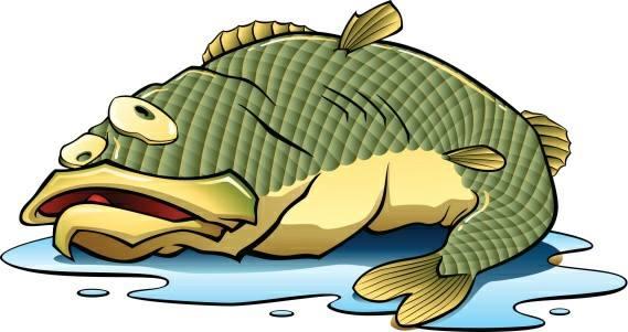 cá cảnh thủy sinh bị chết