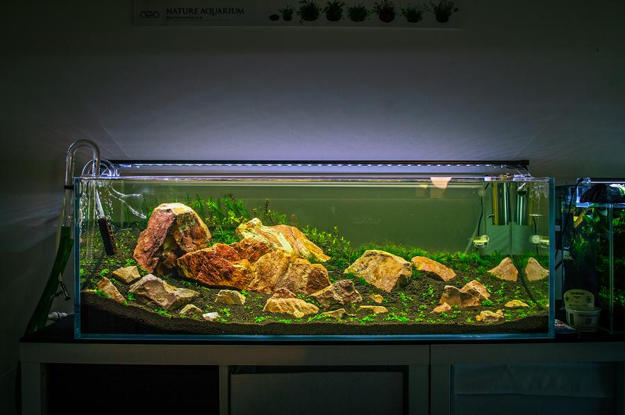 lựa chọn cây trồng cho bể thủy sinh