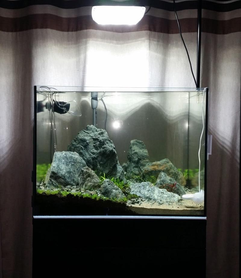 bể kính thủy sinh 60cm