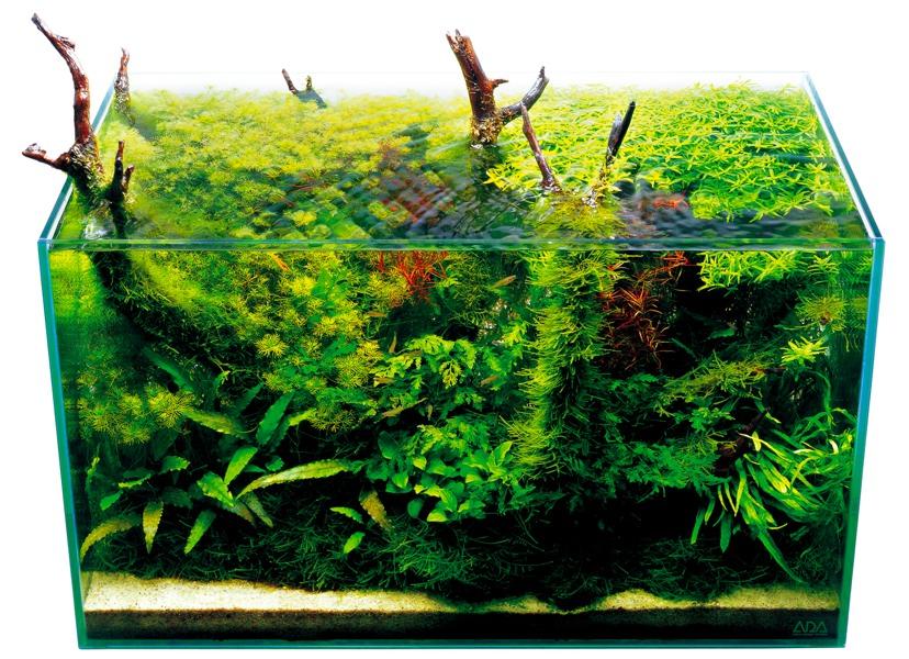 bể thủy sinh tự nhiên ada nhật bản