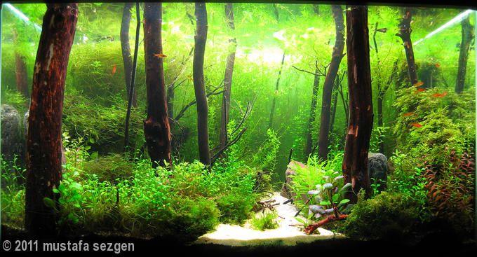 bể thủy sinh bố cục rừng