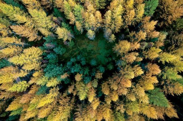 khu rừng nhìn từ trên cao