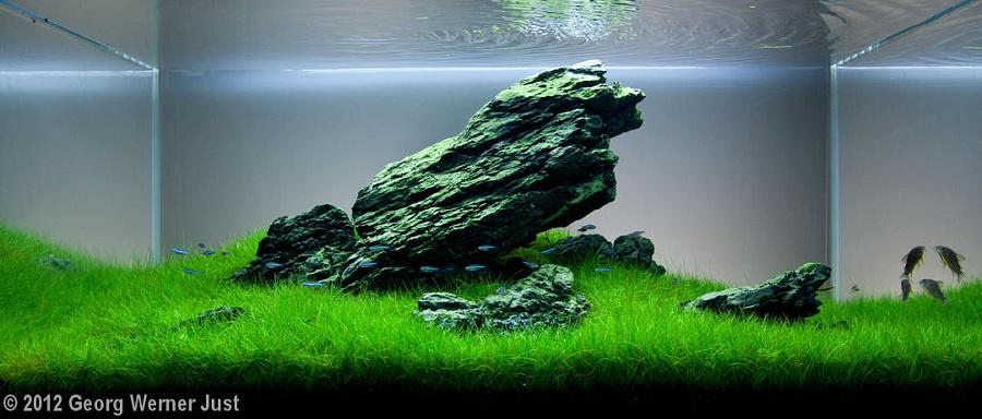 bể thủy sinh phong cách iwagumi thiền định