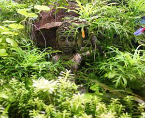 tượng phật trong bể thủy sinh