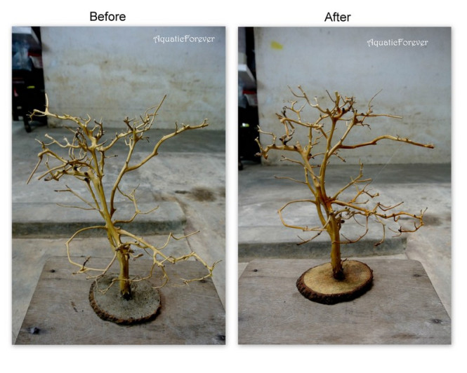 tạo hình cây bonsai bể thủy sinh