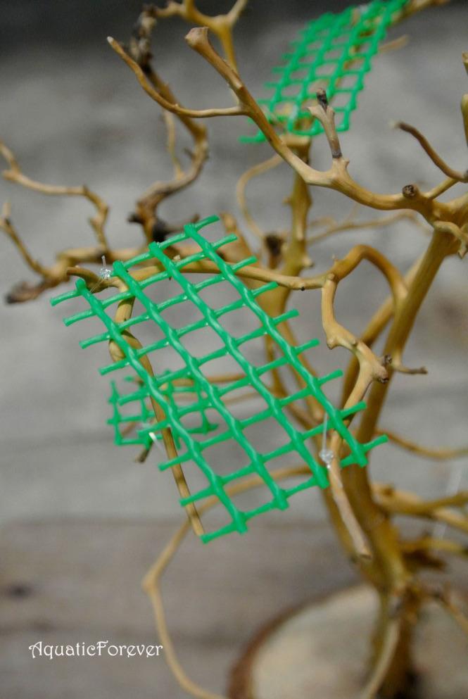 buộc vỉ nhựa vào cây khô