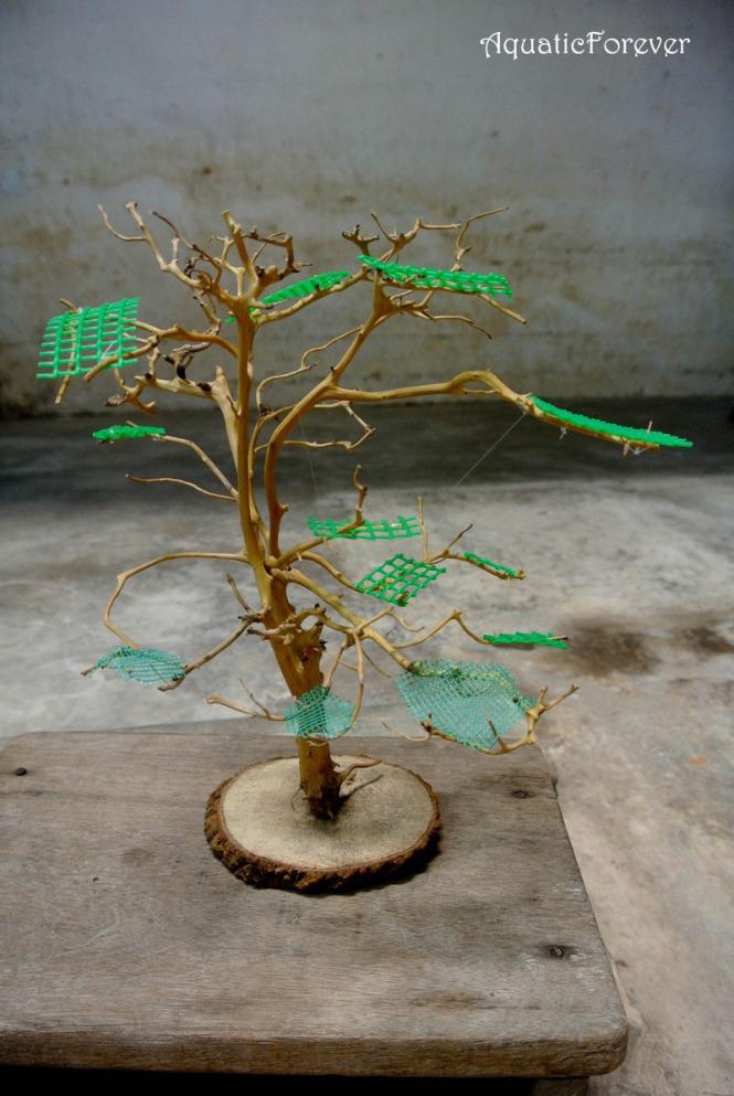 hoàn thiện cây bonsai trong bể thủy sinh