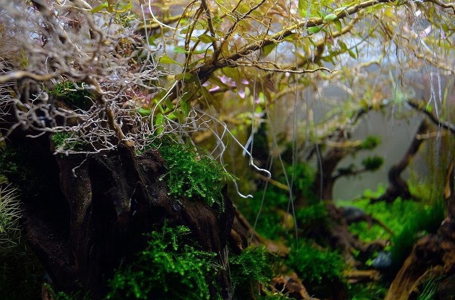 rễ cây thủy sinh phát triển tốt