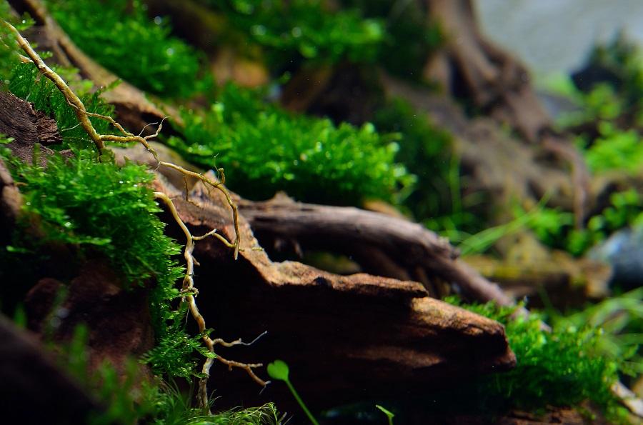 chi tiết rễ cây trong bể thủy sinh