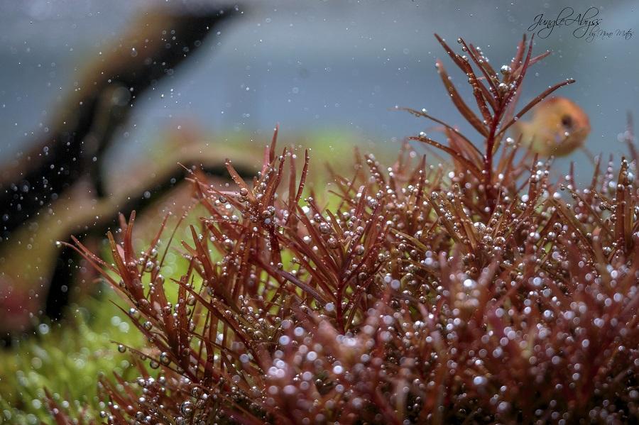 cây thủy sinh quang hợp