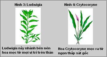 nhánh và hoa cây thủy sinh