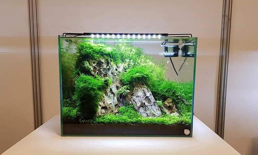 bể nhỏ xinh xắn với rêu
