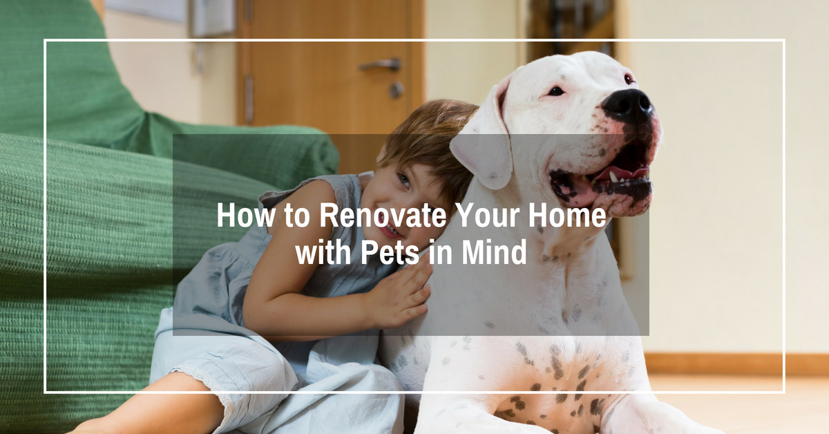 How to renovate your home with Pets in Mind