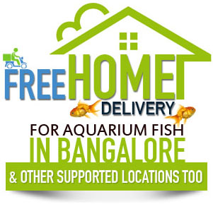 Free home delivery for aquarium fish