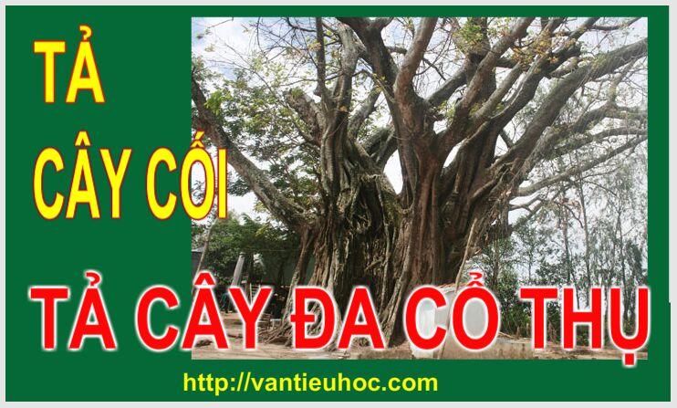 Tả cây cối – Tả một cây cổ thụ  - Tả cây đa