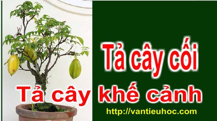 Tả cây cối | Tập làm văn 4 | Tả cây khế cảnh | How to describe a Star fruit Tree