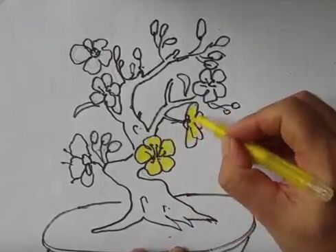 Cách vẽ Hoa mai | drawing  a Yellow apricot blossom