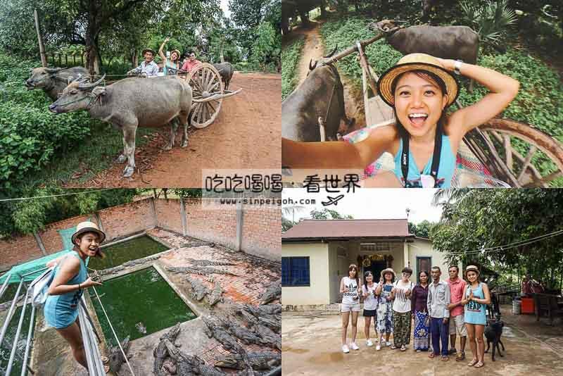 柬埔寨水牛車