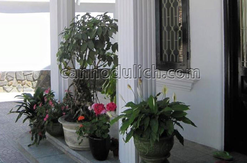 Villa Moss Rose-1 Đà Lạt