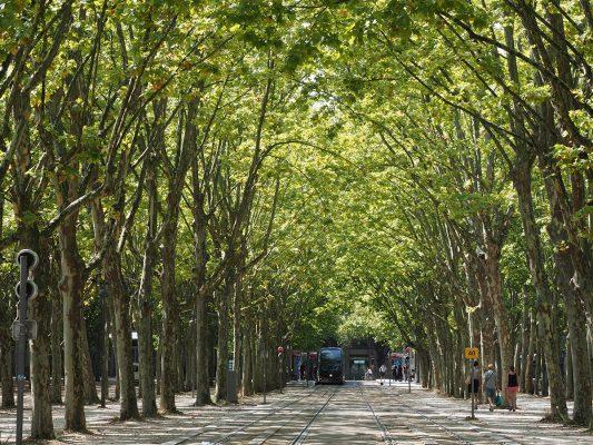 波爾多城內景色亦很優美,包括這條綠色的林蔭路。