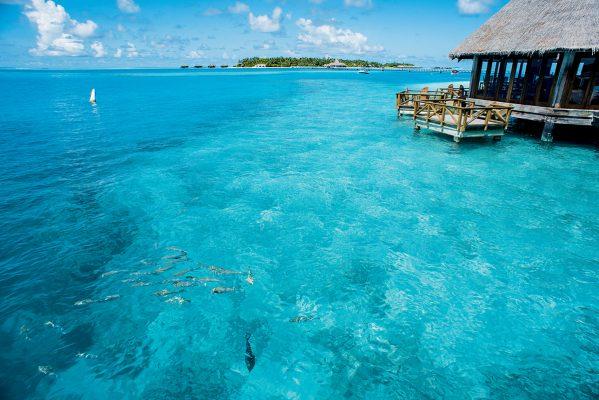 度假村岸邊肉眼可見魚群在海中游過,不時亦會發現小鯊魚蹤跡。
