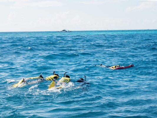 浮潛時有機會看見大海龜、鯨鯊或魔鬼魚。