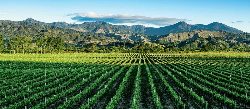 Cloudy Bay位於紐西蘭Marlborough的葡萄園區。