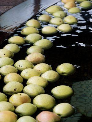 酒店設有蘋果溫泉,新鮮蘋果在泉水中散發陣陣清香。