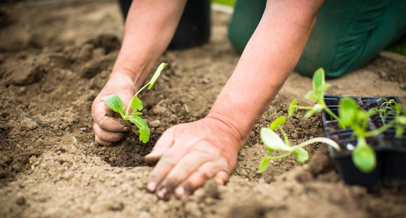Grow More Plants