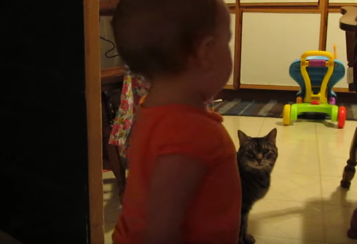 cats-talking-to-baby-