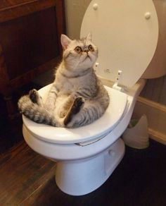 pinterest https://www.pinterest.com/explore/cats/