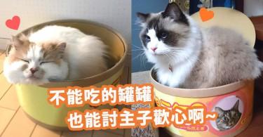 打開會有真正的喵星人? 毛茸茸的「貓罐頭」~不能吃下去卻令人一見愛上!