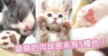 每隻貓都有獨特的肉球!原來貓肉球可分為5種色~你的主子是哪種顏色?