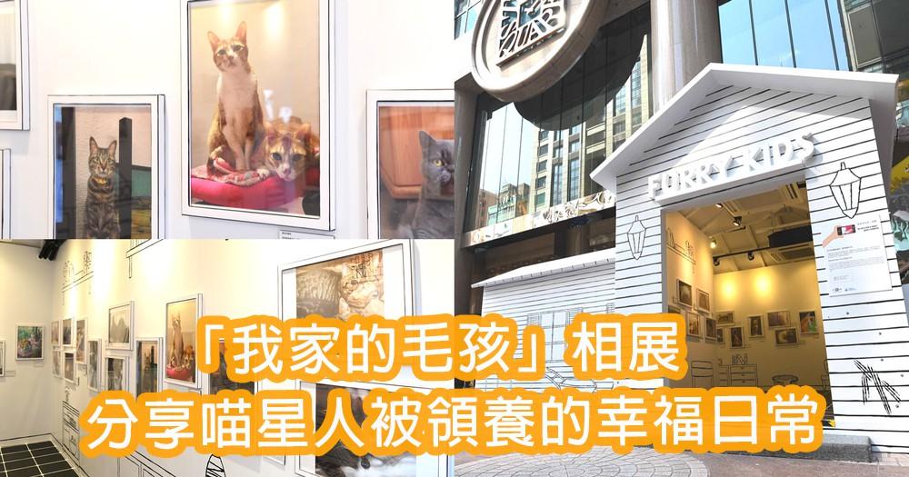 被領養的幸福生活!時代廣場「我家的毛孩」相展 ~分享50隻喵星人的幸福日常