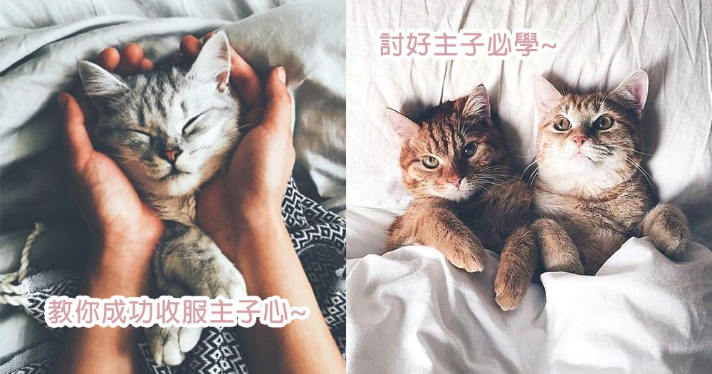 親親主子必讀!3個方法讓貓奴成功收服主子心,主子也要成為你的人~