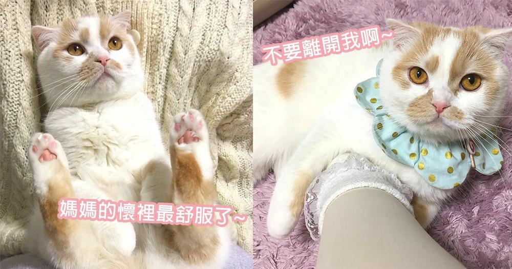 遇上這樣的主子幸福感倍增!喜歡躲在主子懷中的貓星人,貓咪們就是磨人又可愛的小妖精~