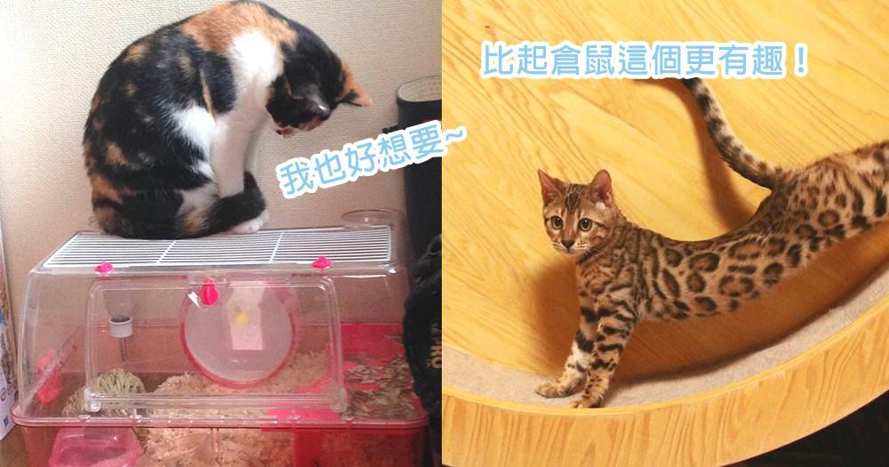 奴才、倉鼠壓力很大呢!家中貓星人俯視緊盯倉鼠籠,人家才不是對倉鼠虎視眈眈啦~