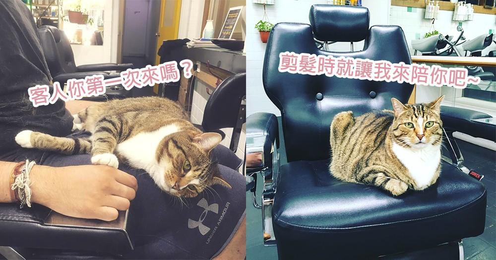髮廊現在提供這樣的服務?澳洲貓咪主動躺在客人大腿上,等等要多給我點罐罐喔~