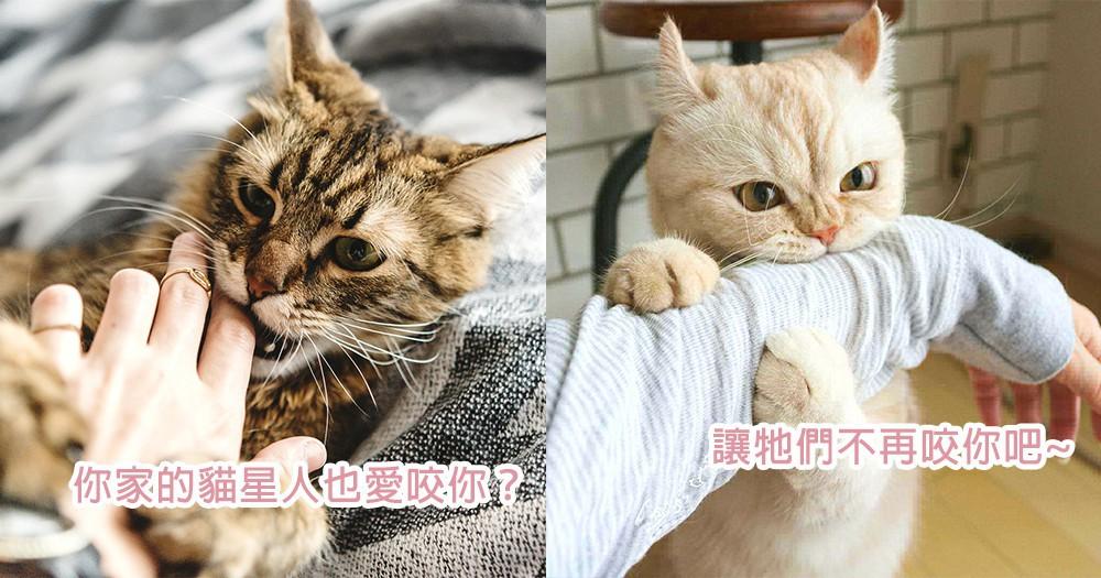 貓星人有愛咬人的習慣?3個方法讓你矯正貓咪常咬人行為~都是玩得太興奮的過錯啊!
